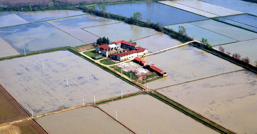 Il riso in arrivo dal Far East mette in crisi 4mila imprese italiane