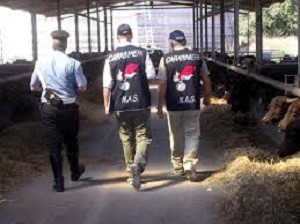 Carabinieri NAS, ingenti sequestri di alimenti