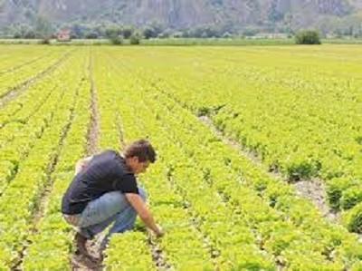 LAVORO, AGRICOLTURA – raddoppiano i fondi per il ritorno dei giovani alla terra