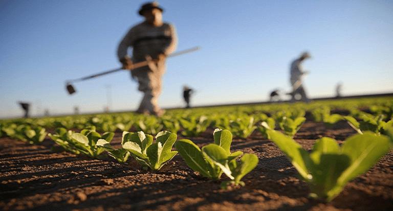 Agricoltura, Ufficiale: Possono entrare in Italia 18 Mila Migranti per Lavoro