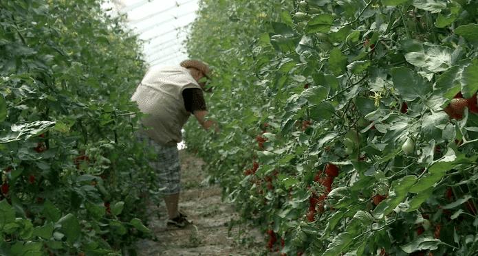 Contributi per gli under40 che scelgono l'agricoltura