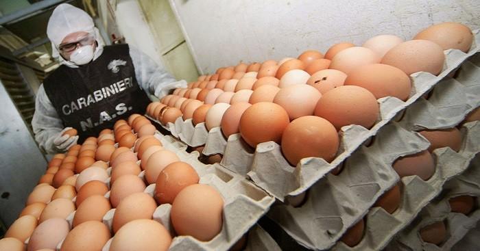 Sequestrati da Nas 18.000 uova e 6 quintali di carne e pesce