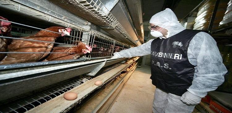 Nas sequestrano 9 aziende e 32.000 uova irregolari