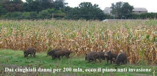 Dai cinghiali danni agricoltura per 200 mln, ecco il piano anti invasione