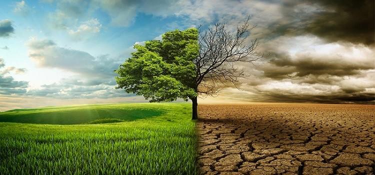 CIBO E CAMBIAMENTO CLIMATICO: QUAL È LA SITUAZIONE IN ITALIA?
