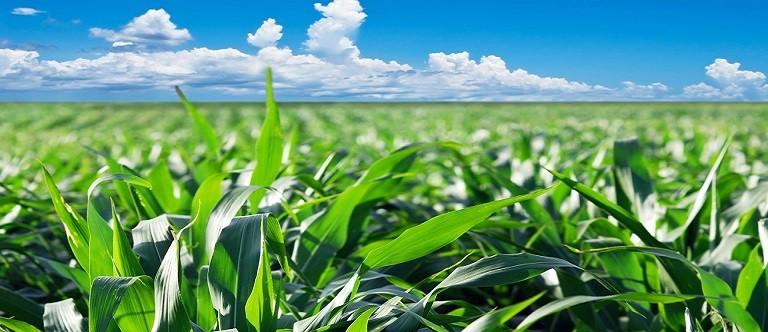 «Per l'agricoltura servono contributi concreti, altro che parole»