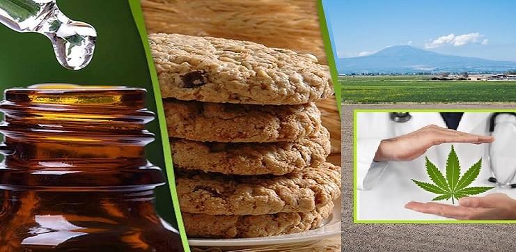 La cannabis arriva a tavola, dai biscotti all'olio