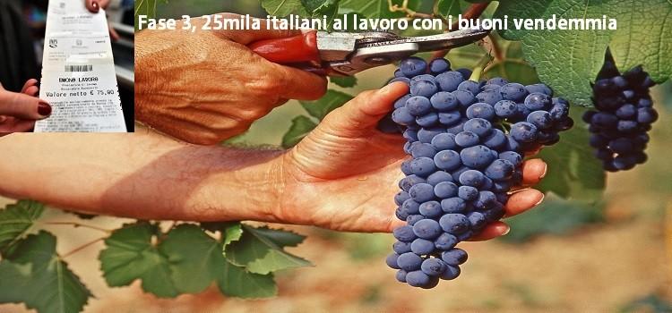 Fase 3, 25mila italiani al lavoro con i buoni vendemmia