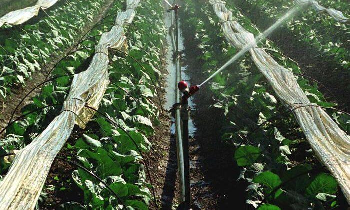 Agricoltura: Ue ritira dal mercato il pesticida Mancozeb